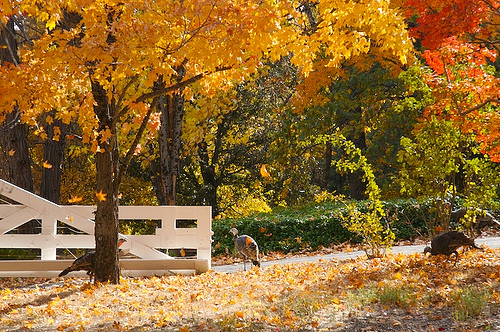Julian ,CA in the Fall. Photo credit: https://c2.staticflickr.com/4/3051/2285447594_5d35435691_z.jpg?zz=1