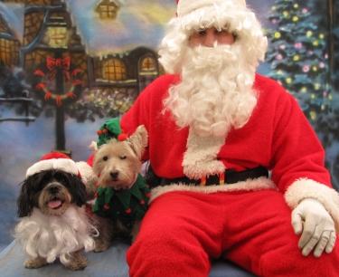 48382-santa dogs 1