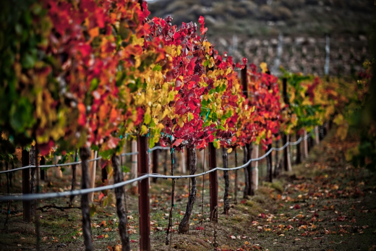 Temecula, CA. Photo Credit: http://www.temeculawines.org/blog/wp-content/uploads/2012/09/Doffo-vineyard-2.jpg