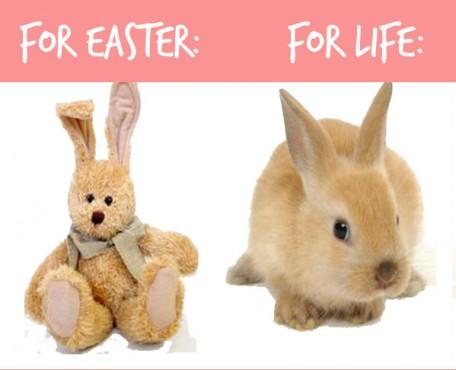 bunny4onebar2-456x370
